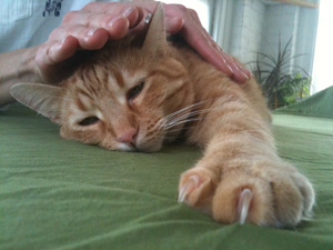 animal reiki ii