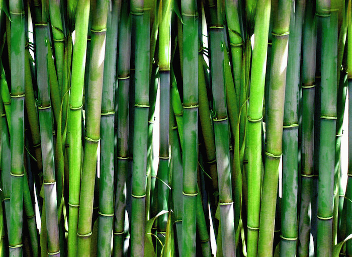 Bamboo tree for Reiki table sheets is the best!
