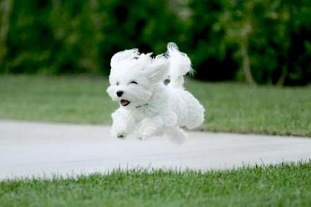 Reiki dog running