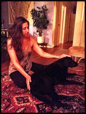 Reiki for Animals on Jaya the dog